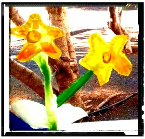 Daffodil - Welcome Spring!